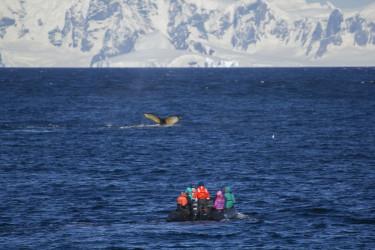 Excursiones marítimas antárticas