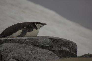 Avistaje de aves en Isla Media Luna